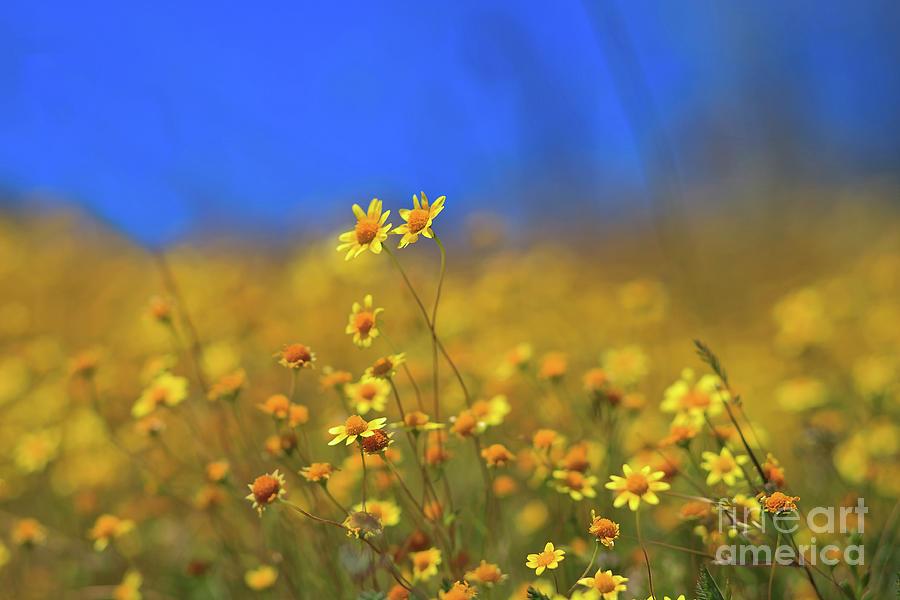 Super Bloom Bokehlicious at Diamond Valley Lake by Sam Antonio Photography