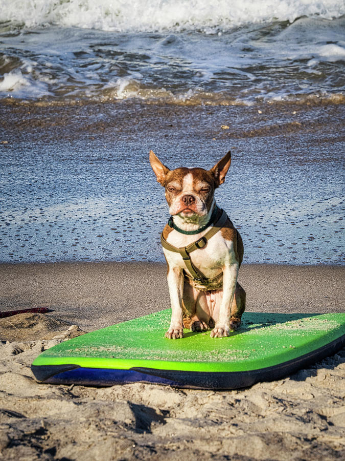 Surfing Dog by David Kay