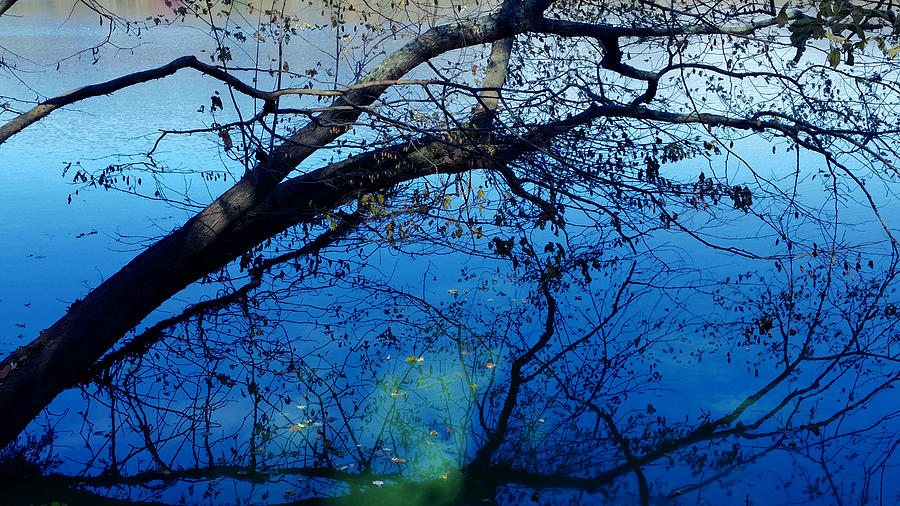 Surreal Reflections on Radnor Lake  by Ally White