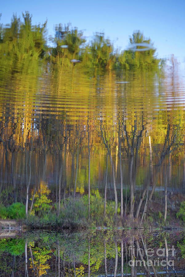 Surreal Rippling Forest Reflection In Water Photograph