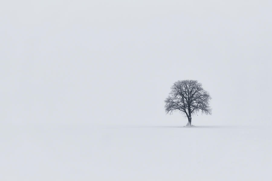 Bare Photograph - Surrender by Ludwig Riml