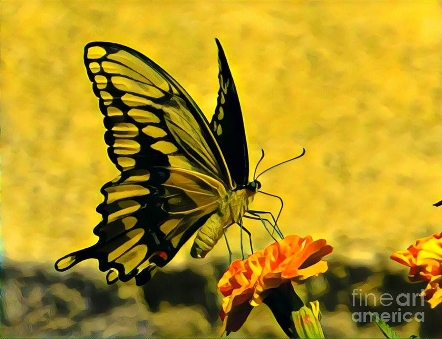 Swallowtail on Marigold by Marilyn Smith