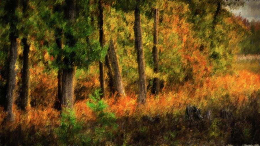 Swamp Dawn by David Heilman