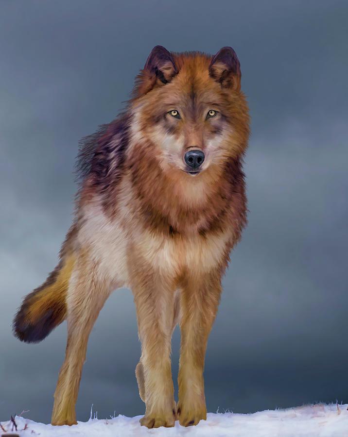 Swan Lake Wolf Portrait by Mark Miller