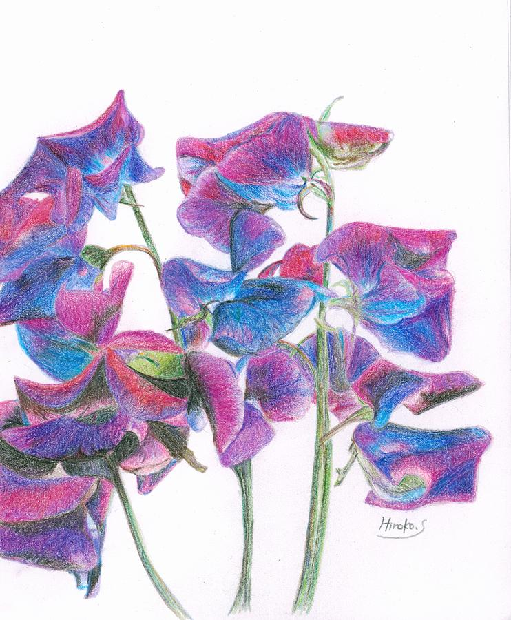 Flower Drawing - Sweet Pea by Hiroko Stumpf