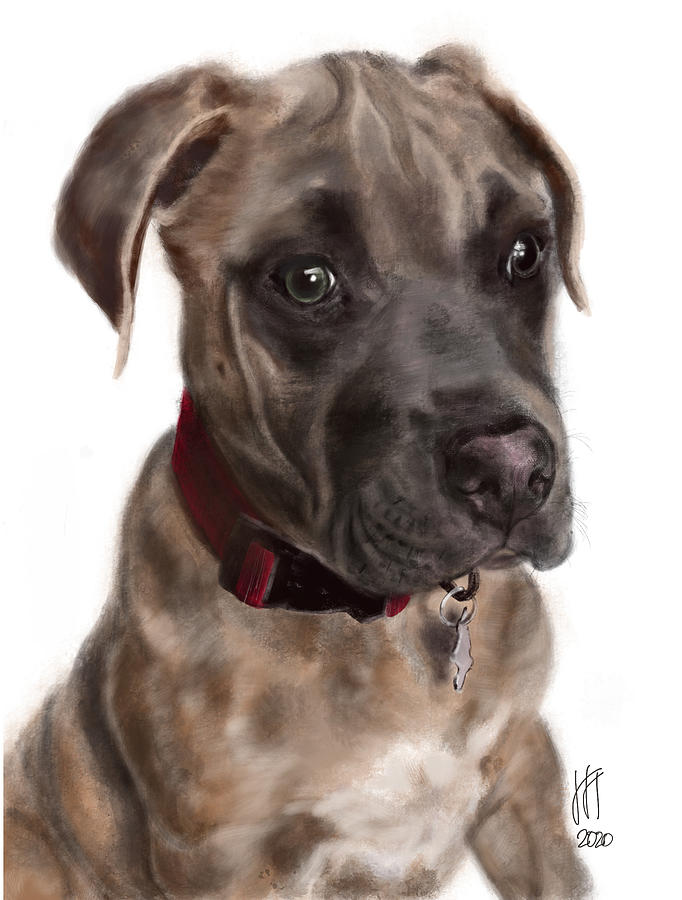 Pit Bull Digital Art - Sweet Pit Bull Puppy with a Red Collar  by Lois Ivancin Tavaf
