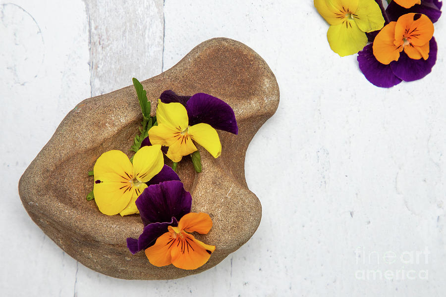 Sweet Violet Blossoms Rock Photograph