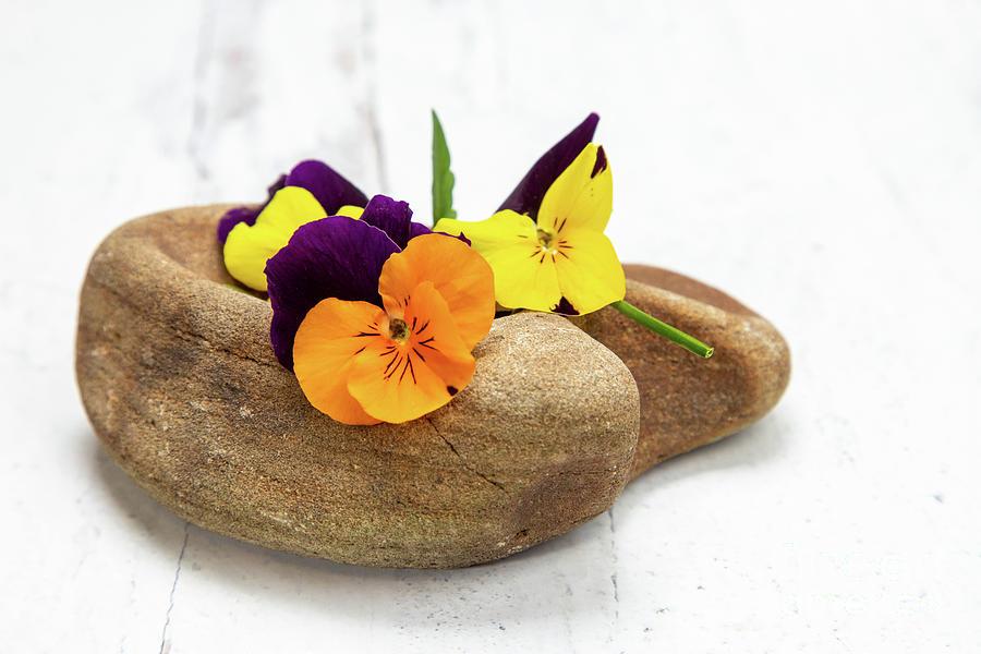 Sweet Violet Blossoms Vi Photograph