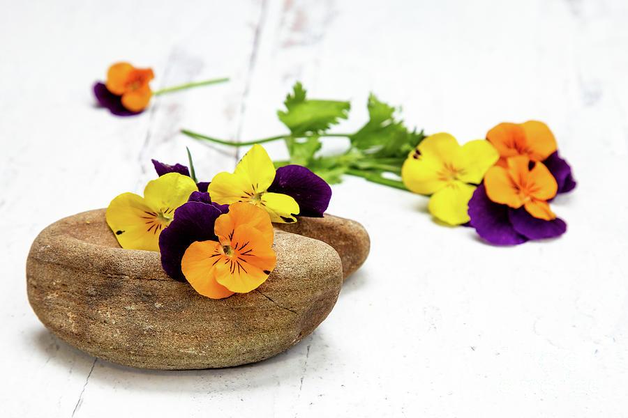 Sweet Violet Blossoms Vii Photograph