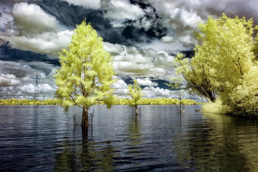 Swimming Tree by Harold Carlson