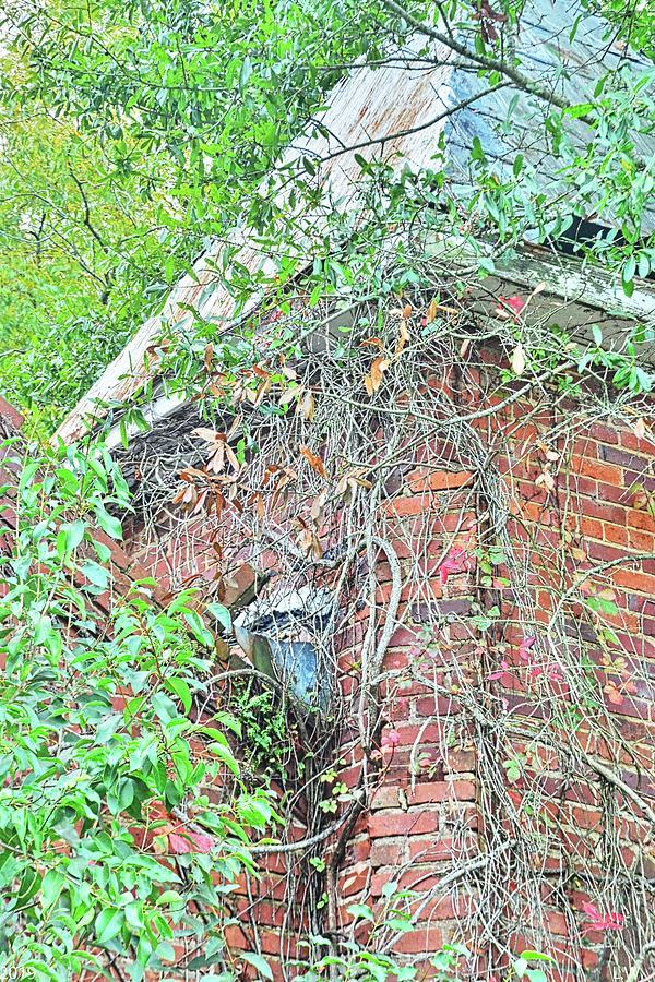 Tabernacle Baptist Church Ruins Blackville Sc by Lisa Wooten