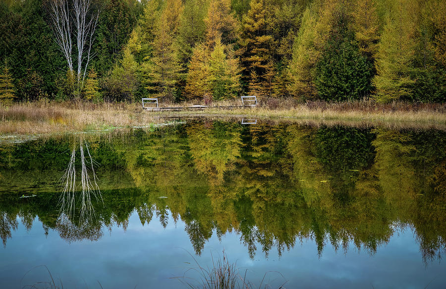 Tamarack Reflection  by David Heilman