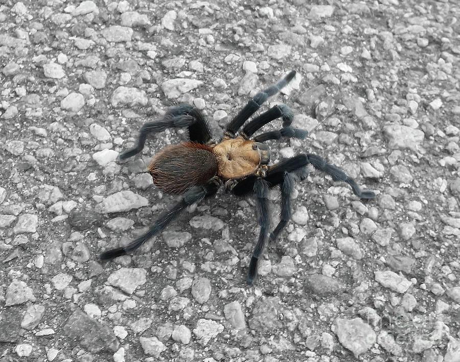 Tarantula by Tony Baca