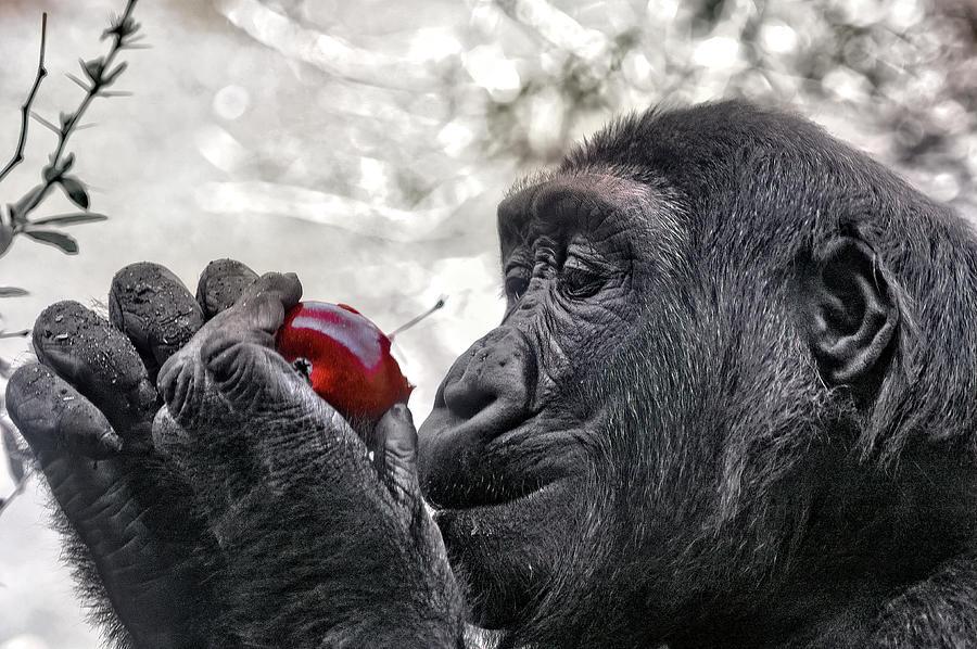 Taste the Apple by PAUL COCO