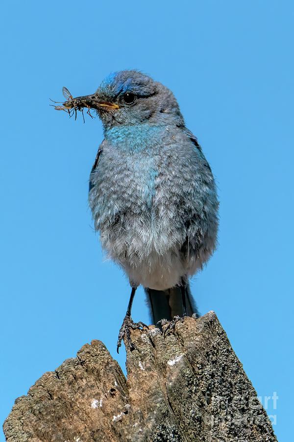 Tattered Blue Photograph