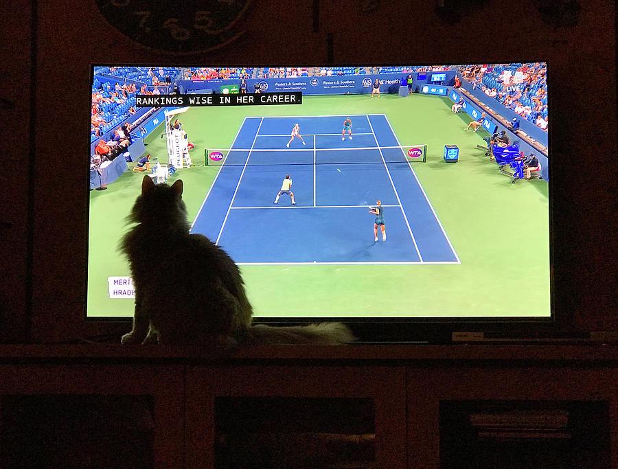 Tennis Fan Cat Photograph by Karen Zuk Rosenblatt