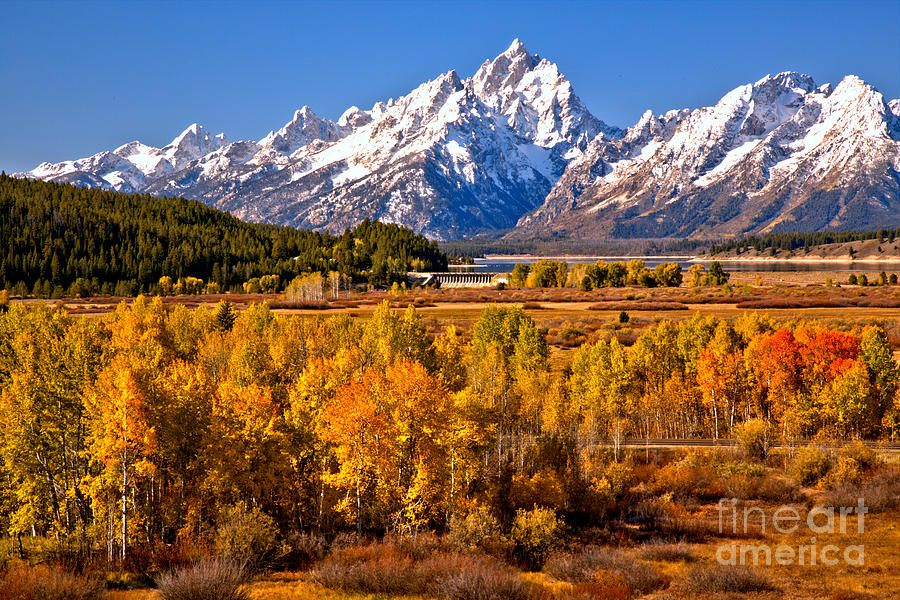 Teton Fall Forest by Adam Jewell