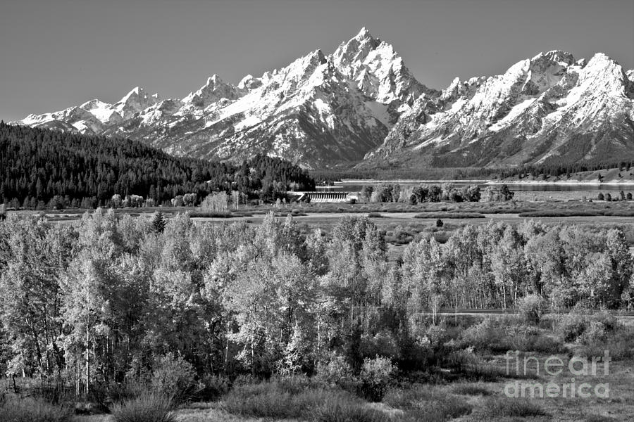 Teton Fall Forest Black And White by Adam Jewell
