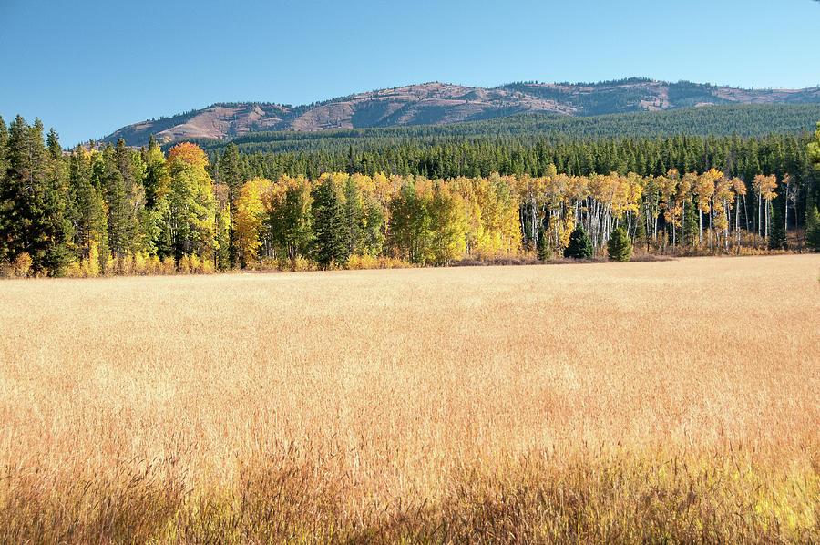 Teton Meadow Photograph