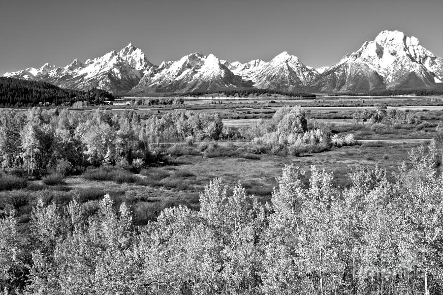 Teton Snow Caps And Aspens Black And White by Adam Jewell