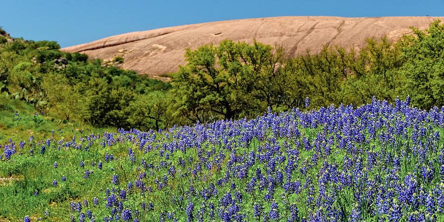 Texas Bluebonnets And Enchanted Rock 2016 Photograph