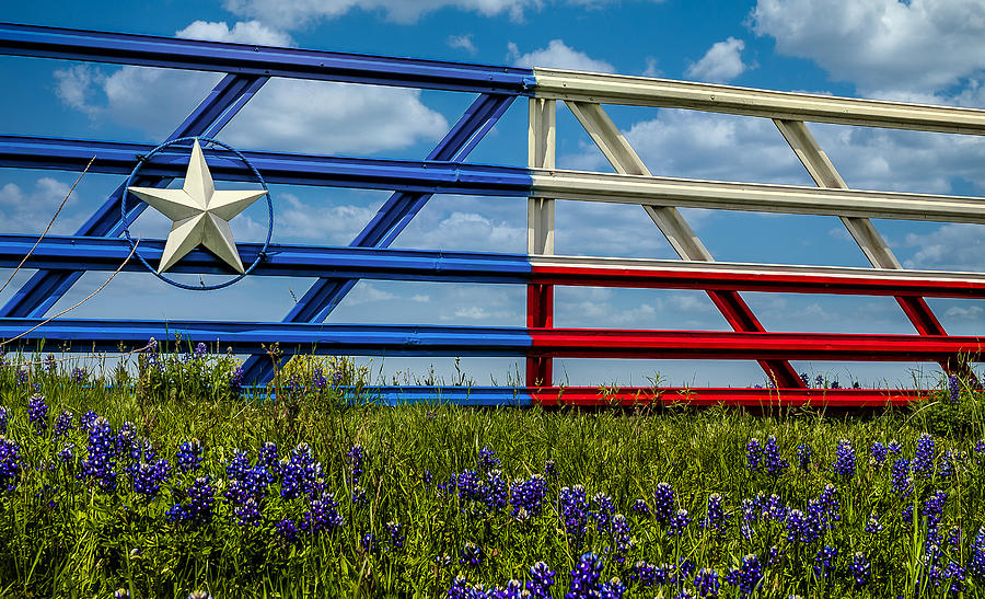 Texas Flag Painted Gate with Blue Bonnets by Robert Bellomy
