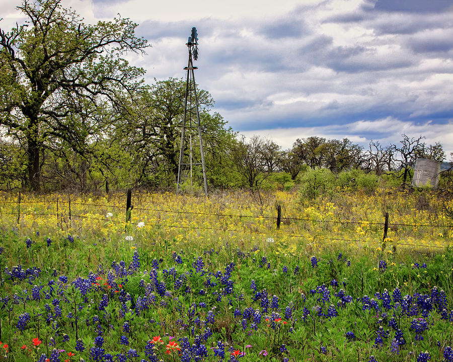 Texas Hill Country 2252 by Harriet Feagin