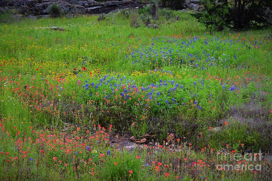 Texas Hill Country Wildflowers Photograph