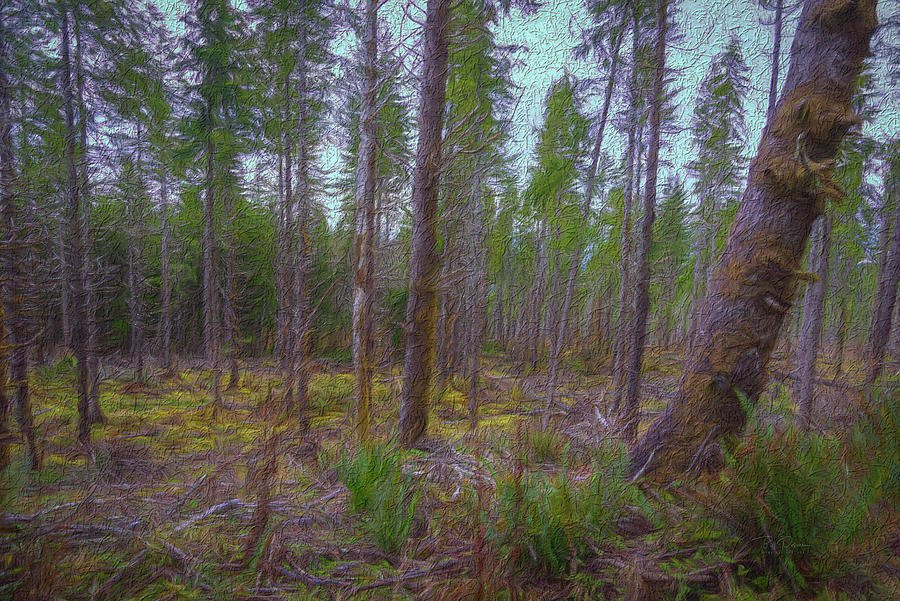 Textured Woods by Bill Posner