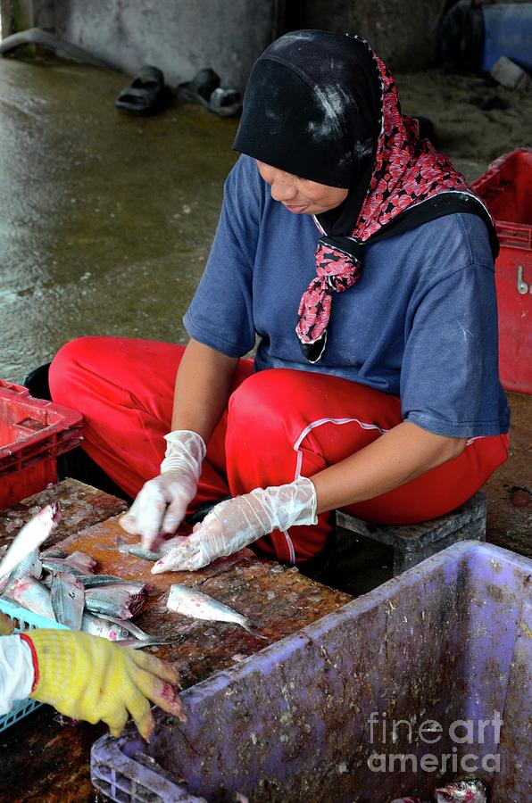 Thai Muslim Woman In Sweat Pants And Headscarf Guts And Cleans Fish Pattani Thailand Photograph