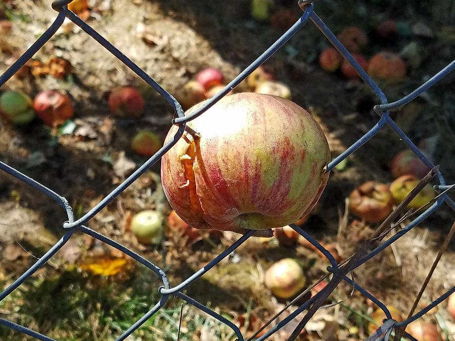 The Apple Doesn't Fall Far by Suzy Piatt