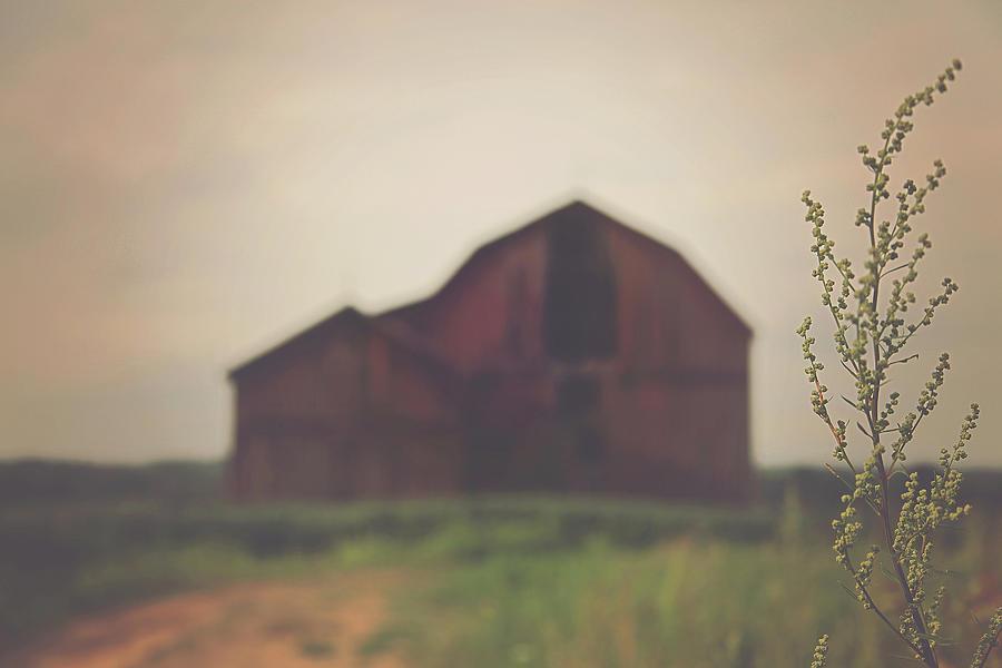 Barn Photograph - The Barn Daylight Version by Carrie Ann Grippo-Pike