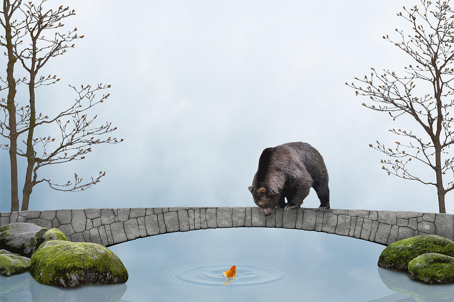 The bear and the goldfish by Moira Risen