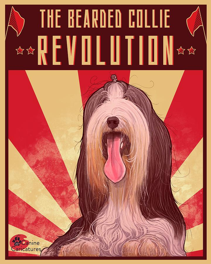 The Bearded Collie Revolution Drawing