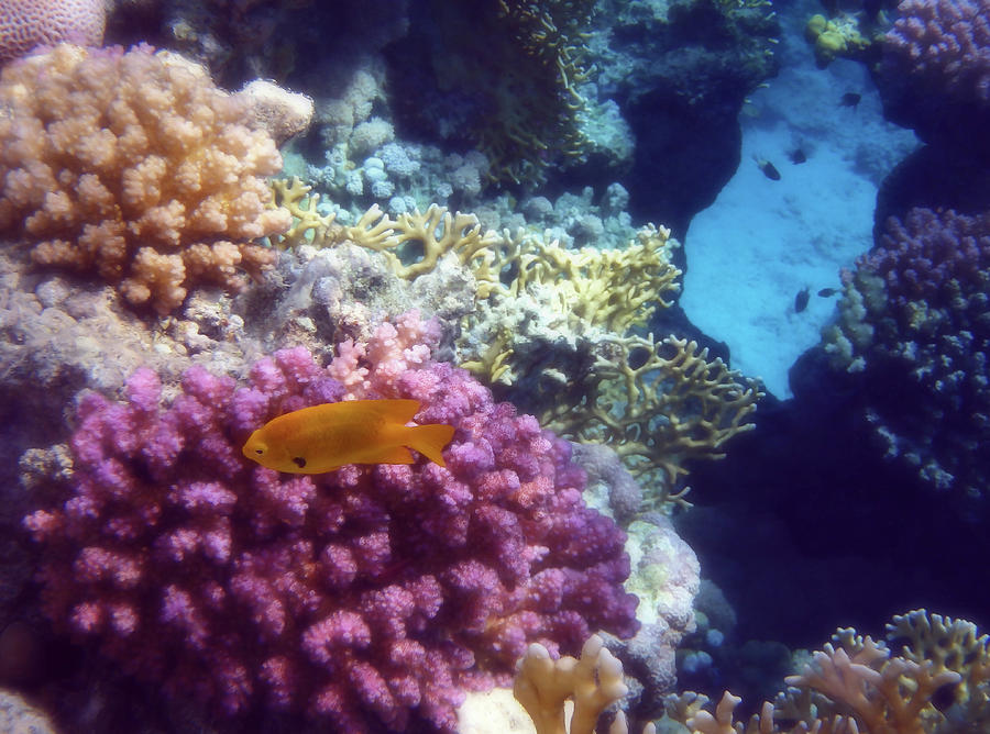 The Beautiful And Mysterious Red Sea World Photograph