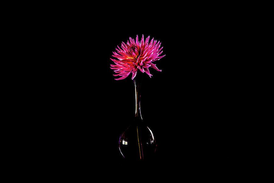 The Beautiful Dahlia Lady Lapita In An Elegant Glass Vase Photograph