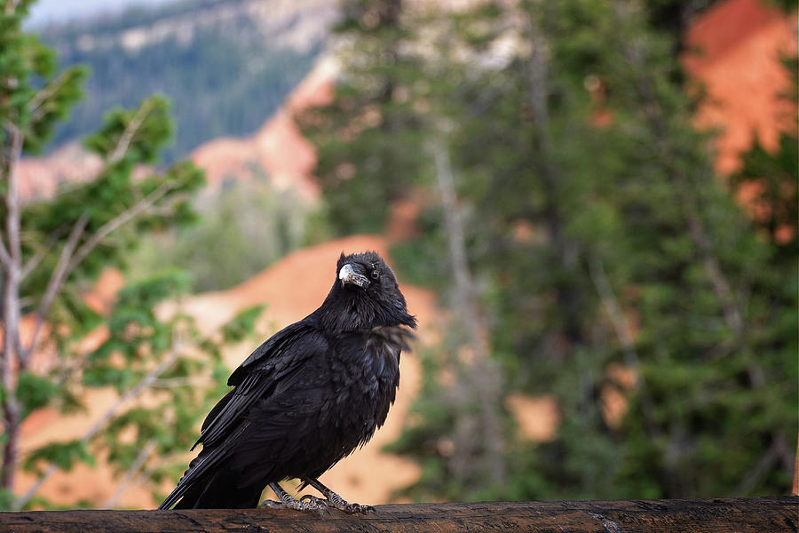 Bryce Canyon National Park Photograph - The Begger by Jack and Darnell Est