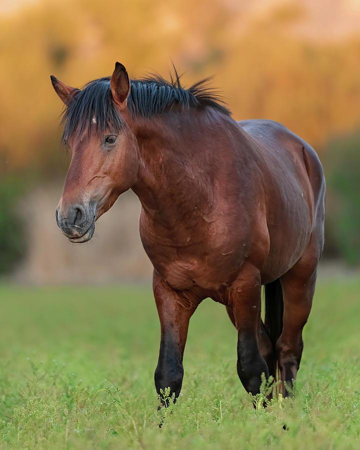 Stallion Photograph - The Big Lead. by Paul Martin