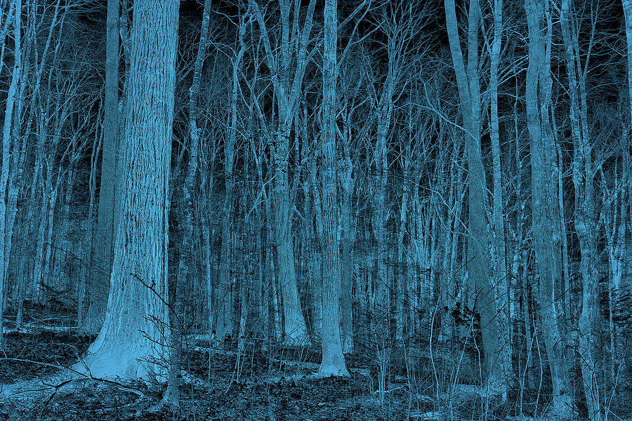 The Blue Forest Photograph