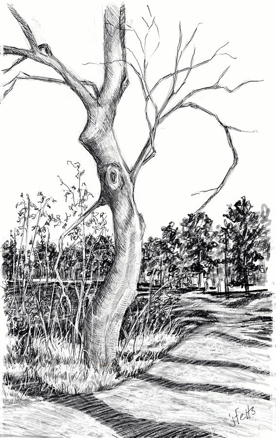 Tree Drawing - The BOO Tree by Janet Felts