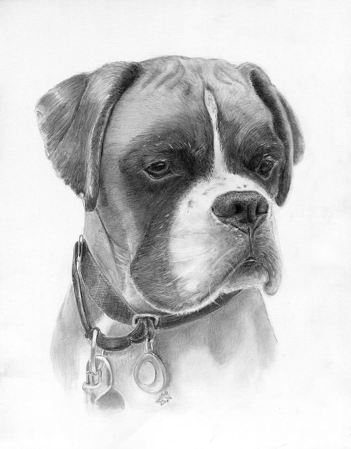 Boxer Drawing - The Boxer by Lauren Bellon