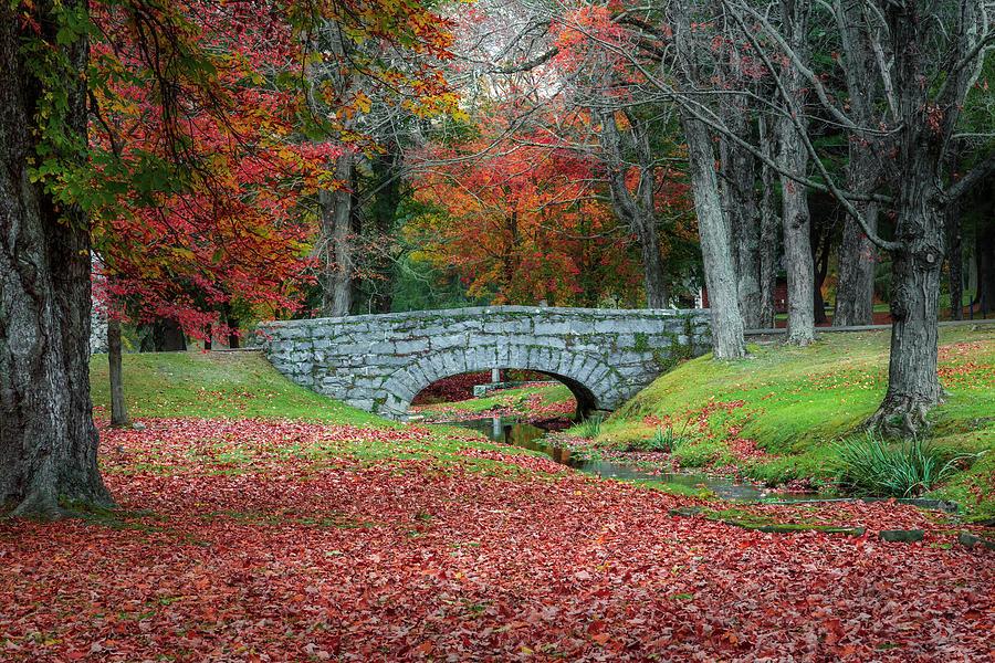 The Bridge by Bill Wakeley