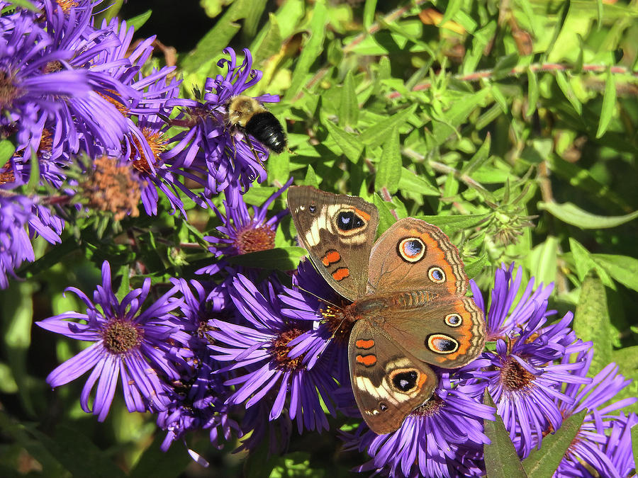 The Butterfly And The Bee Photograph