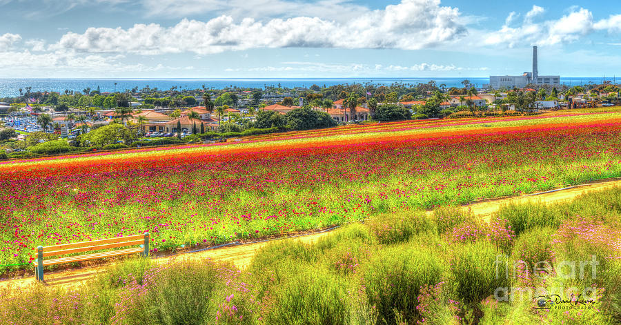 The Carlsbad Flower Fields by David Levin