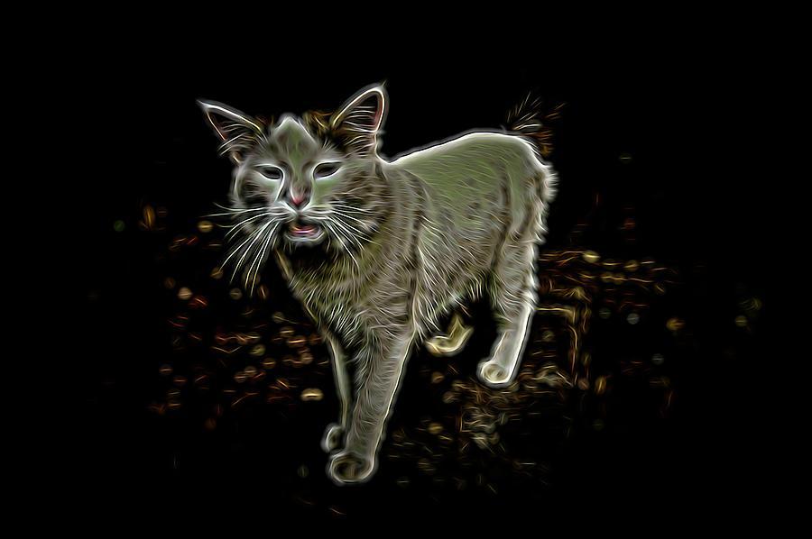 The Cat 8 Photograph