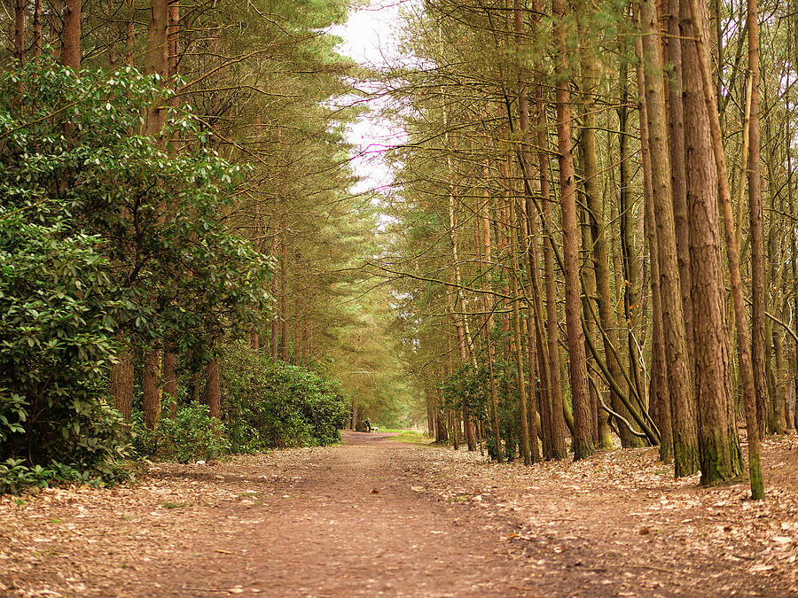 The Clearest Way Into The Universe Is Through A Forest Wilderness Photograph