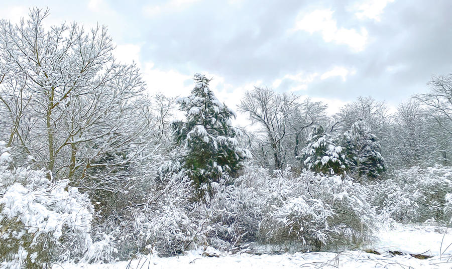 The Dance Of Winter Photograph
