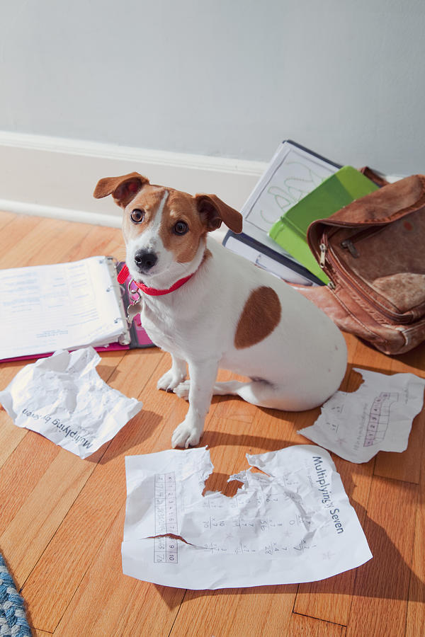 The dog ate my homework Photograph by PM Images