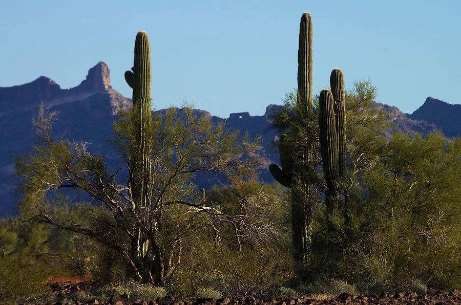 Arizona Photograph - The Eagles Eye by Allan Erickson