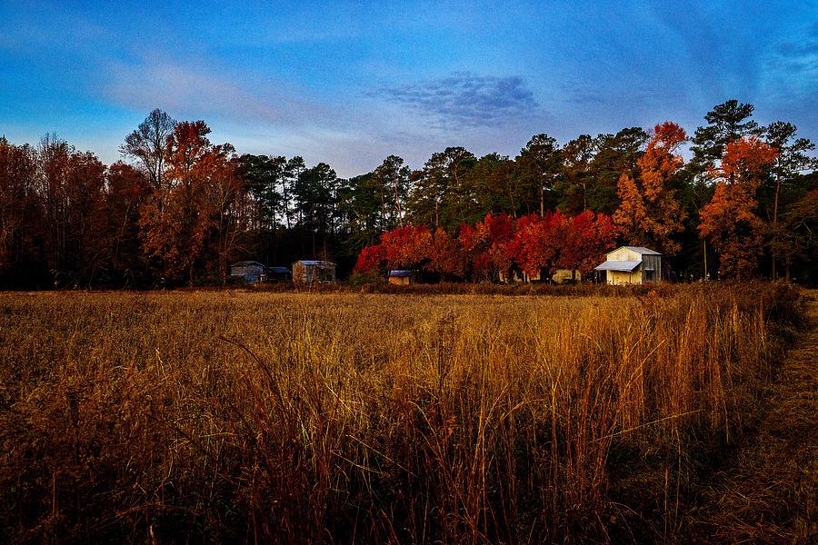 The Farm by John Harding